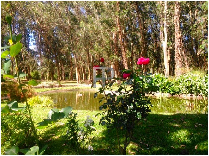 House for sale Punta del Este: Garden pond