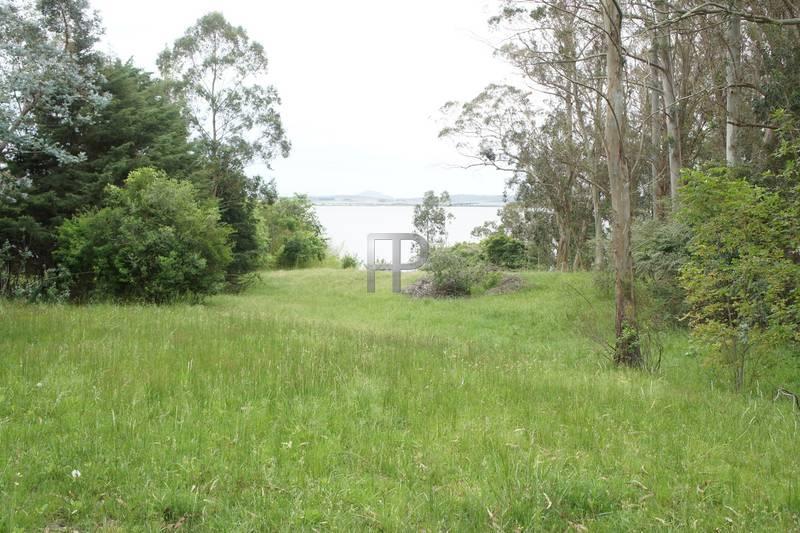 views of the farm